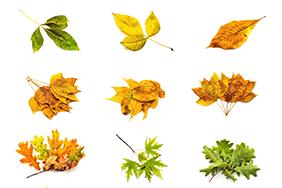 20种树叶高清图片下载