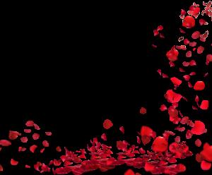 表白日玫瑰花瓣半邊框