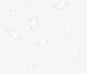 飛舞白色羽毛