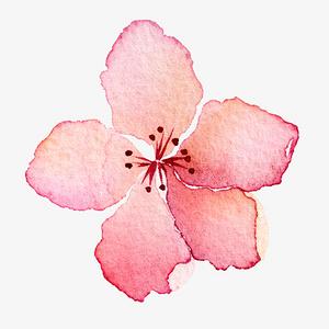 单个桃花梅花手绘
