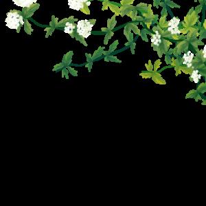 春天夏天前景白色花綠色葉子手繪