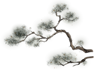古风国画水墨画松树