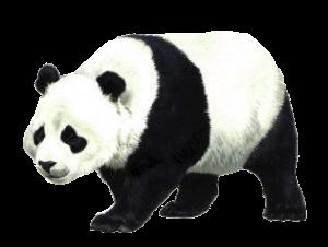 簡筆畫手繪黑白大熊貓