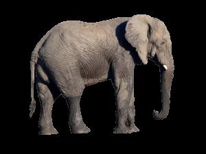 長鼻子大象動物