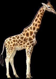 花色圖案長頸鹿動物