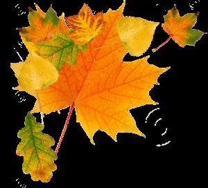 秋季金色多彩楓葉