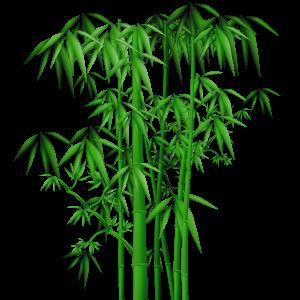 大片深綠帶葉竹子