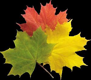 秋季三色多彩楓葉